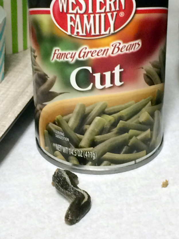 This Wednesday, Feb. 17, 2016 photo shows a snake head that Troy Walker, of Farmington, Utah, says she found in a can of green beans. Walker said she made the unsettling discovery while she and fellow church members were preparing meals Wednesday night for neighbors. Walker said she took the snake head and empty can back to the grocery store where she bought the food. She took a picture first of the snake head to send to Western Family, a food distribution company based in Oregon, which has halted some shipments of the green beans.(Troy Walker via AP)